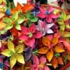 Soulignez la fête des mères avec un jeu de fleurs