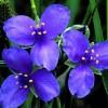 Offrez des fleurs virtuelles pour la fête des mères !
